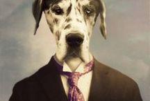 animal portraits / by judith pedersen