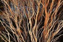 plumas, hojas, ramas