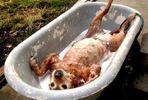 dog health...advice....training....tips / by Kathleen Blignaut
