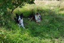 Millie and Alfie!