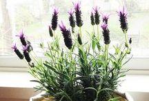 Indoor plants / http://www.canarius.com/en/