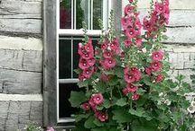 gardening / door wendy holmes