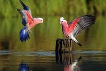 Pássaros...