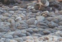 Knit_Crochet