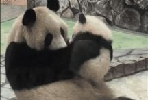 GIFS / Funny Interesting Awesome