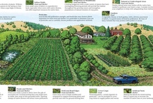 Vegetable Garden Planning / by Love My Books II