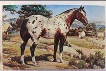 Art of the Horse / by Nancy Carver