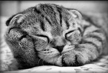 Sleepy Kitties / Cats tend to always be napping and falling asleep in the most random ways and locations! Check out these adorable animals and how they were caught taking a cat nap.