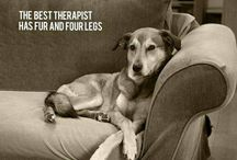 Wise Words / Words to live by. Words expressing the love we feel for our pets. Words to make us laugh and cry.