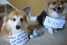 True Confessions / Our pets can be so silly... And so sweet. Cats and dogs who need to confess their actions.