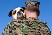 Trooper Dogs / Dogs are often important members of our troops in times of war and peace.  They also wait patiently for their guardians to come home, joyfully greeting them when they get back.