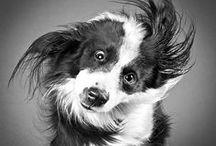 [Inspiration] Photo animalière / Retrouvez ici nos coups de coeur en photographie animalière