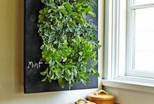 Urban Garden / indoor plants; urban garden Urban Gardens - Urban style, design, and nature