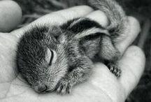 Animaux choux / Les animaux sont uniques et ont aussi le droit de vivre