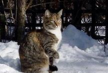 Trap-Neuter-Return (TNR) / Trap-Neuter-Return (TNR) is a growing movement to support feral cats. They are vaccinated, neutered and THEN returned to a certified colony where caretakers provide some food, shelter and monitoring of the community.