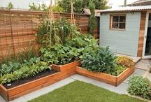 Garden / A collection of beautiful gardens, gardening tips, garden furniture and much more!