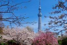 The Top 3 Must-Go Places around Tokyo for an Ultimate Sakura Experience! / http://www.jnize.com/en/article/100000035/