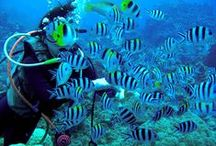 Recommended also by the Editorial Department! Japan's Diving Spots TOP 10 – 6!