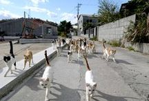 """Complete Guide to the """"Cat Island"""" Ogijima in Seto Inland Sea"""