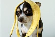 LOL: Dogs / Dogs are always getting themselves into a pickle.  Lovable and Funny!!