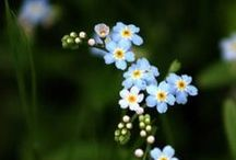 The Language of Flowers...F