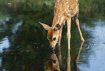 Beautiful creatures of nature