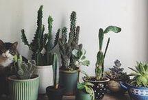 - Plants inside -