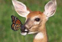 #Wildlife #Wild animals #Nature #Живой мир #Мир животных #Природа #Жираф #Носорог #Олень#Дикие звери / #Онлайн #психолог #домашних #питомцев - #animal #psychology  https://www.facebook.com/animal.psychology   #Зоопсихолог онлайн. http://psychologiespets.ru #