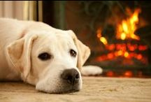 "#Fireplace #Comfort #House #Heat #Камин #Уют #Дом #Тепло / #Психолог #онлайн. ""#Психология #личного #пространства"" #Psychologist #online. ""The #psychology of #personal #space"" http://psychologieshomo.ru #камины #уют #дом #"