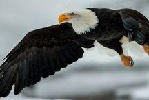 """#Predator birds #Eagles #Owl #Хищные птицы #Орлы #Совы #Орел #Беркут #Сокол #Филин #Белогловый орел / #Онлайн #психолог #домашних #питомцев - #animal #psychology  https://www.facebook.com/animal.psychology  #Психолог домашних #питомцев http://psychologiespets.ru #""""Психология личного пространства"""" http://psychologieshomo.ru   #орлы #орлиные #совы #филины #хищные #птицы #"""