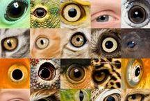 """#Eyes to eyes #Sight.  #Eye  #contact #Sight #Глаза в глаза #Взгляд #Визуальный контакт #Микросъемка / #Онлайн психолог #домашних #питомцев - #animal #psychology  https://www.facebook.com/animal.psychology     Психолог домашних питомцев http://psychologiespets.ru           #Психолог #онлайн. """"#Психология #личного #пространства"""" #Psychologist #online. """"The #psychology of #personal #space"""" http://psychologieshomo.ru #глаза #Eyes #"""