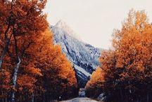 Like autumn leaves