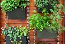 A little herb garden / Funky ways to grow herbs and edibles in small spaces