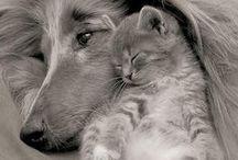 Přátelství