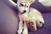 STARBUCKS ✌️ / Starbucks Starbucks