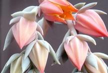 flora / by Ashley Casatelli