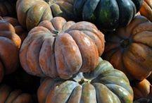 Pumpkin Obsessed / by Jenilee Henderson