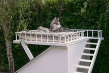 Pet Lovers / by Orange County Association of REALTORS® (OCAR)