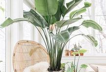 Bring the outdoors in / Bring some green into your home