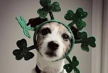 DIY St Patrick's Day / by Marta McCall