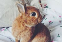 Rabbit Related / Everything to do with rabbits that I want to do or create.  / by Transient Art