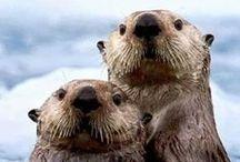 I ♡ Otters / Otters