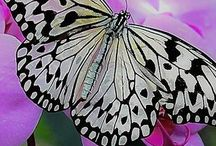 Butterflies & Moths / Extra Pops of Beautiful Color for Our World!