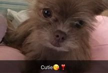 My dog Piper❤