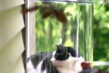 ANIMALS:  PET WISH LIST / by CHERYL BURK