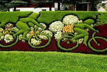 Jardinagem  / Gardening / by Ana Maria Mateus