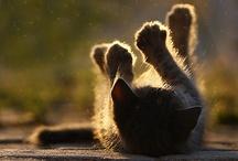 Cute cats >^..^<