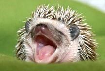Cute animals :3