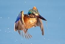 Birds of paradise!!