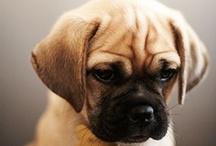 : : Puppies : : / Everything on cutie pie puppies.